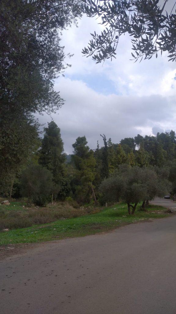 הקדושים יער
